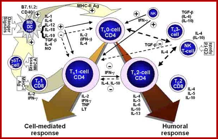 relationship between cell mediated and humoral immunity response