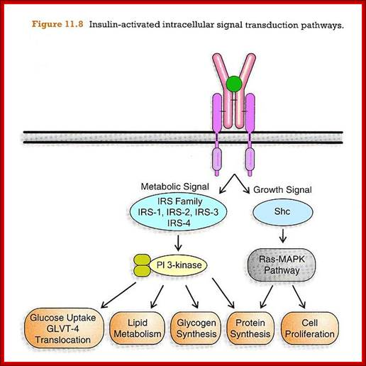 cell signaling research papers Cancer cell publishes peer-reviewed articles reporting major advances in cancer research and oncology, including mechanisms of cancer, therapy resistance, and therapeutic development.