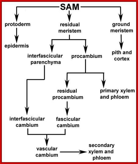 Developmental_Biology2-Plants