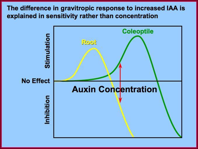 Auxin perception and downstream events - ScienceDirect