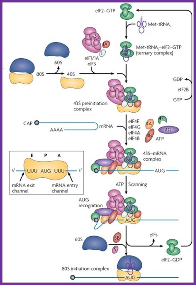 gtp protein synthesis