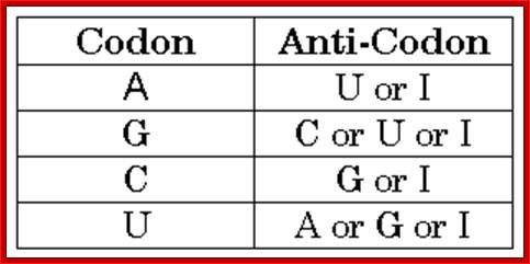relationship of codon and anticodon